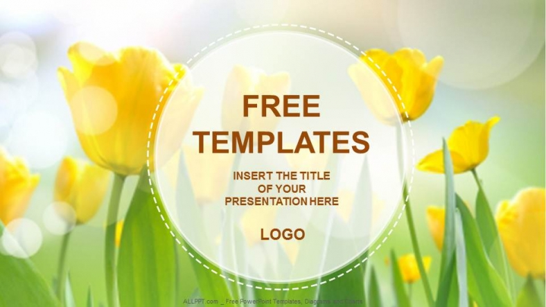 yellow tulips nature powerpoint templates