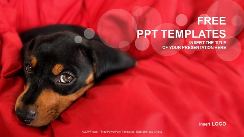Little dog nature ppt templates little dog nature ppt templates 1 toneelgroepblik Images