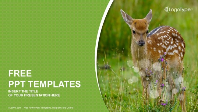 Young-sika-deer-PowerPoint-Templates (1)