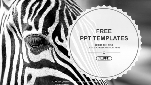 Free simple powerpoint templates design monochromatic image of a the face of a zebra close up powerpoint templates toneelgroepblik